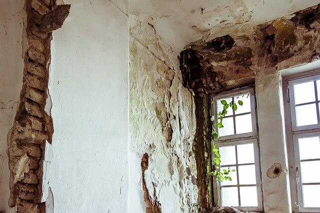Jak pozbyć się grzyba ze ściany